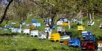Пчеларство като хоби и професия