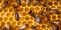 Покупка на пчели и набавяне на инвентар и восъчни  пити