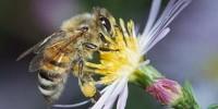 Икономика на пчеларството