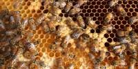 Болести и неприятели   на   пчелите и пчелните   продукти