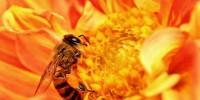 Пчелни продукти с хранително – лечебни свойства
