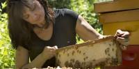 Отглеждане, развъждане и използуване на пчелите. Силните пчелни семейства   и   необходими   условия за създаването им