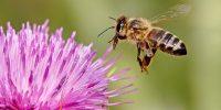 Преглеждане на пчелните  семейства