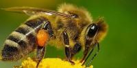 Взаимоотношения между отделните форми  в пчелното семейство