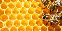 Изваждане на меда