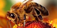 Жилища на пчелите